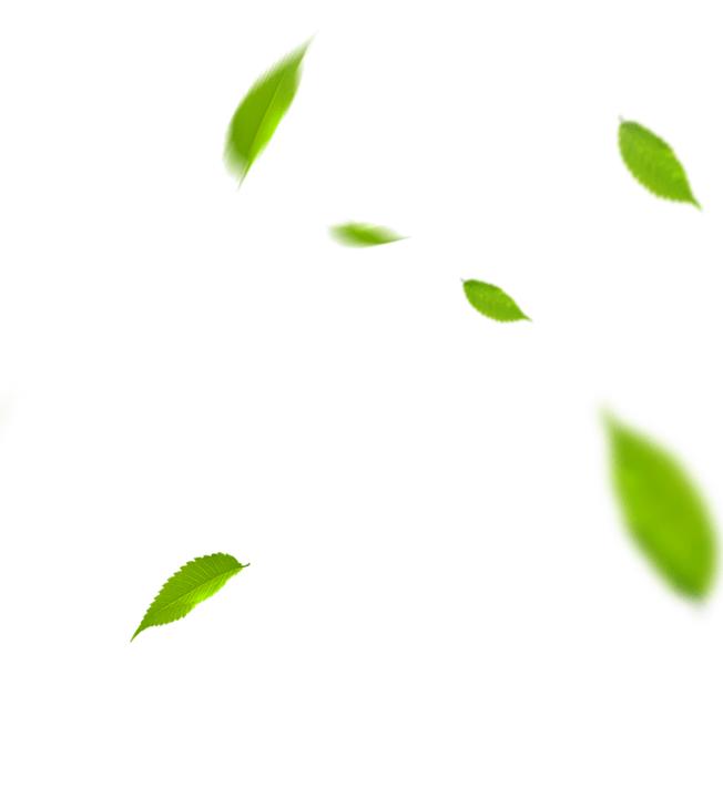 folhas-voadoras2